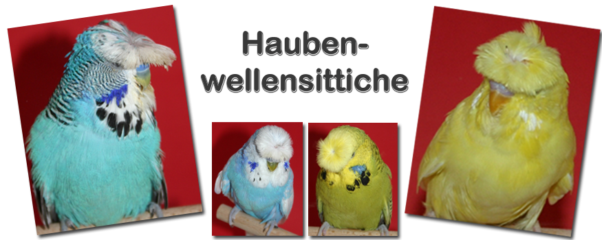 Collage Haubenwellensittiche