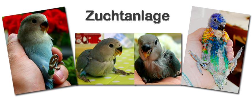 Collage Zuchtanlage